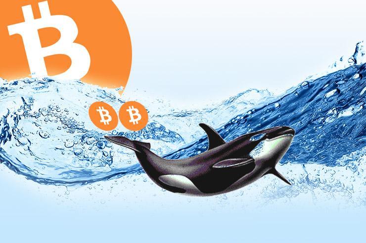 """Một cá voi vừa mới mua 20 triệu USD BTC. Liệu họ muốn tích lũy hay đợi """"xả hàng""""?"""