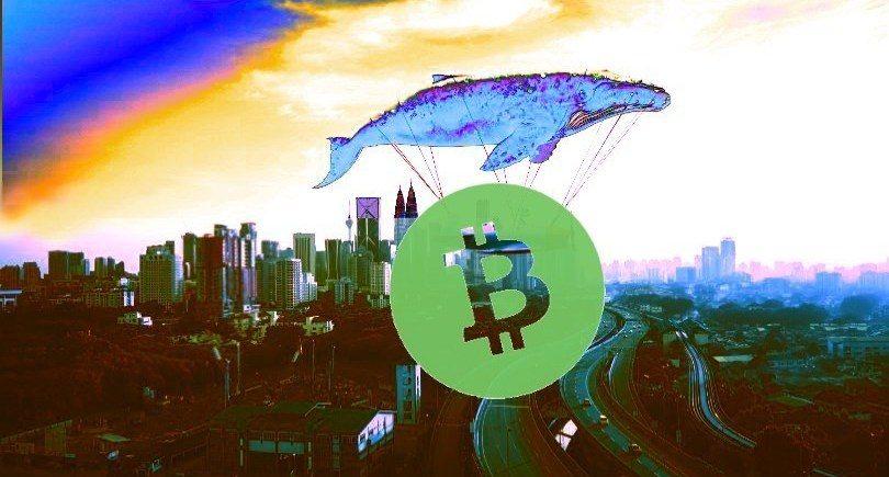 Số lượng cá voi Bitcoin Cash sụt giảm sau đợt tăng giá 39%