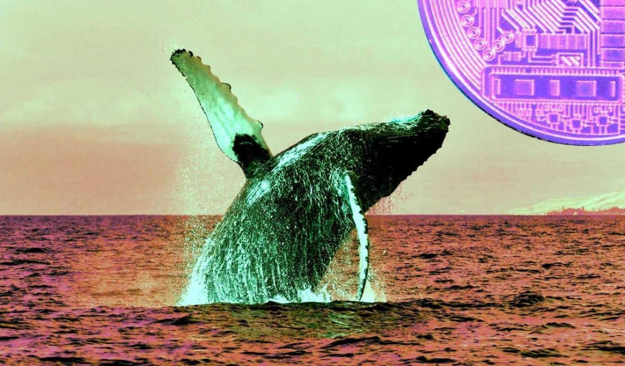 Cá voi đang âm thầm tích lũy 6 altcoin này trong lúc Bitcoin đột phá