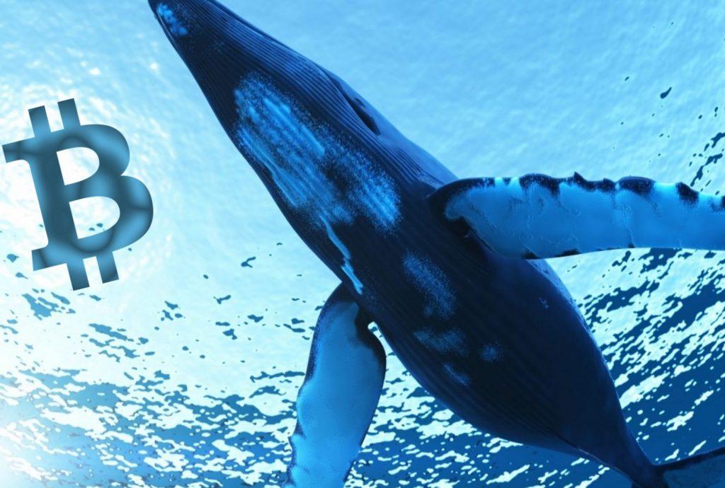 Một cá voi vừa di chuyển gần 90.000 BTC