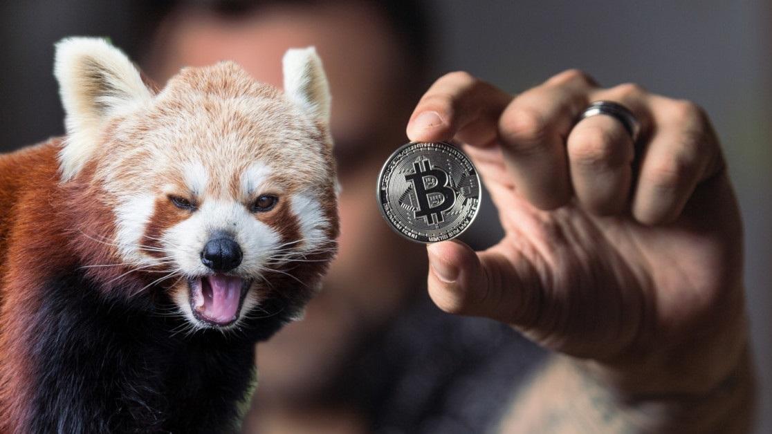 Phe bò bitcoin quay đầu giảm sau khi gặp kháng cự mạnh