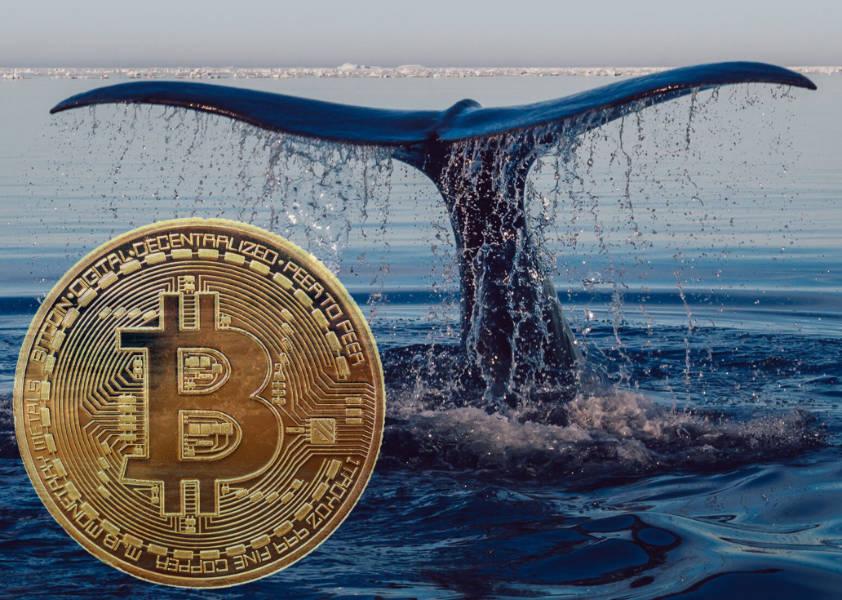 Cá voi vừa di chuyển 56,846 Bitcoin