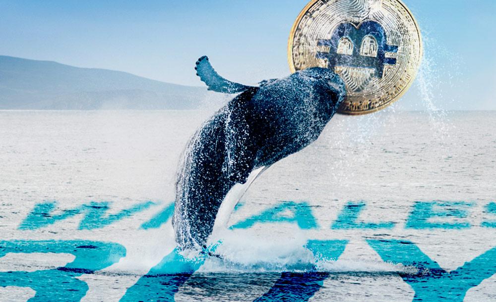 Một cá voi máu mặt vừa di chuyển hơn 20,000 BTC