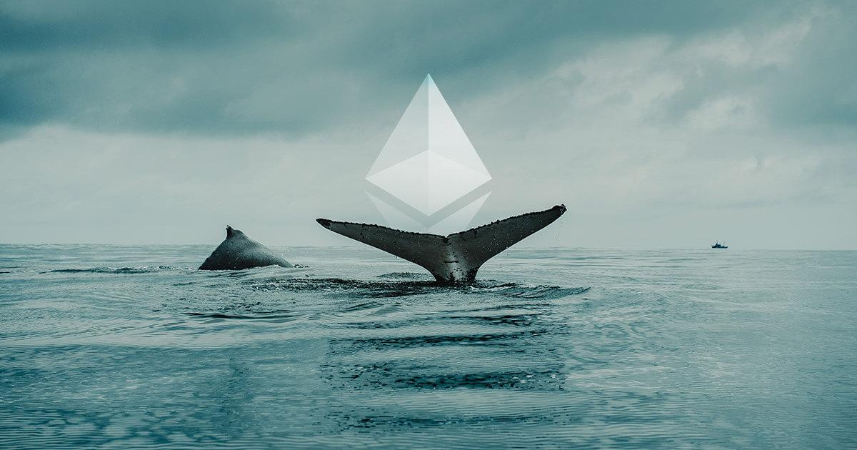Santiment: Cá voi Ethereum đang âm thầm tích lũy thêm