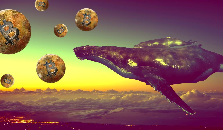 Cá voi di chuyển 4,8 tỷ USD Bitcoin
