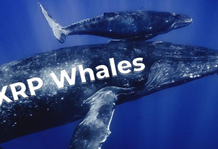 Cá voi gom hàng, giá XRP tăng mạnh nhất trong top 10